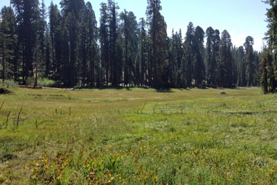 Crescent Meadow, Sequoia National Park, CA
